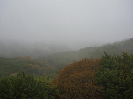 Rainy Day Austin