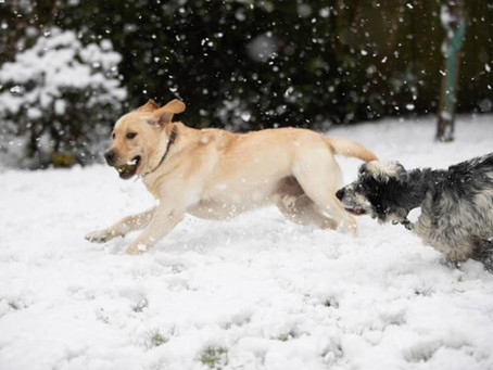 British Dogs Double Down On Snow Day