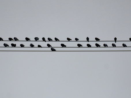 Birds Standing on the Wires