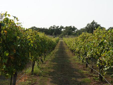 Flat Creek Winery