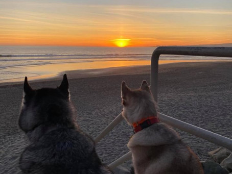 Pups at Sunset