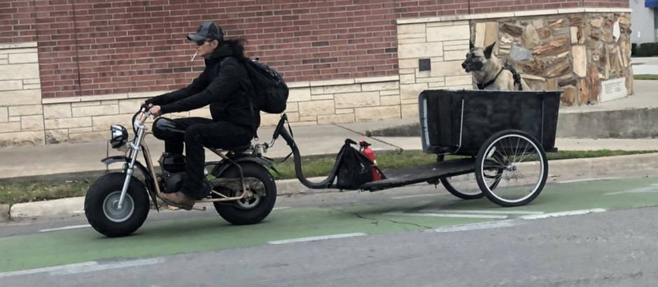 Cruising Pup