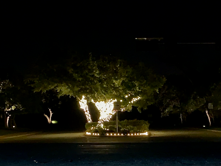 Christmas Lights-Senna Hills