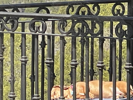 Sunbathing Pup