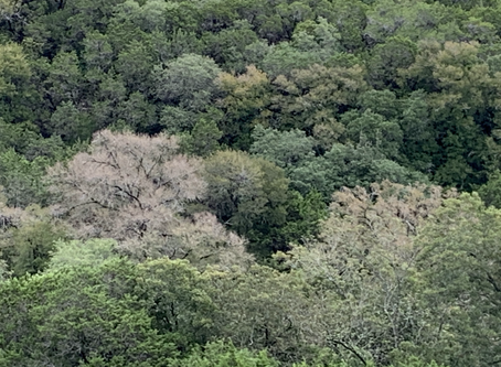 Around Austin-It's Coming on Fall Color