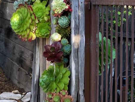 Succulent Gate