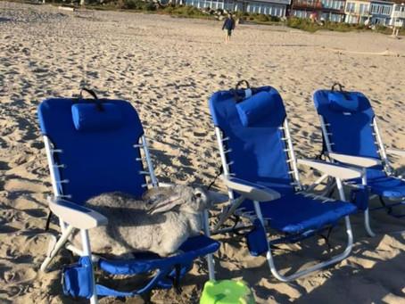Bunny at the Beach