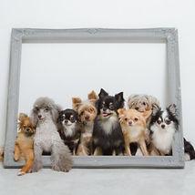 いろんな犬種.jpg