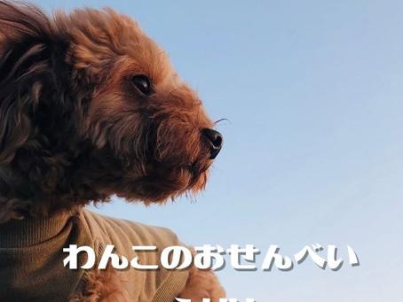 愛犬に米ぬかを!愛犬に米ぬかって大丈夫なの?
