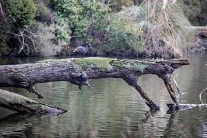 opunake-lake_50289731407_o_edited.jpg