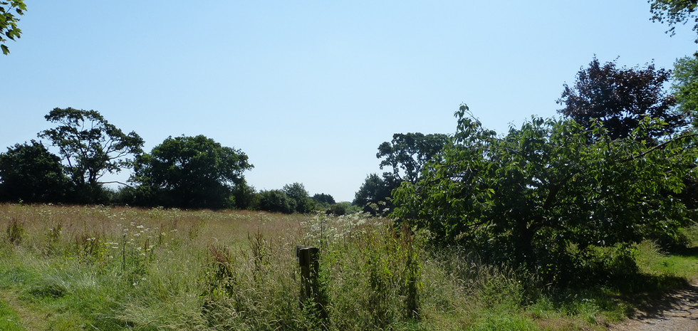 The New Forest National Park - site of a major new access road and junction