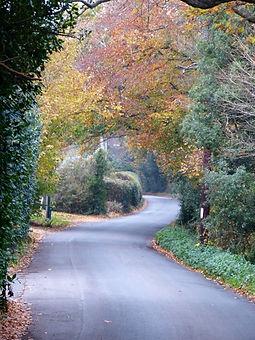 Ridgeway Lane Autumn 1.jpg