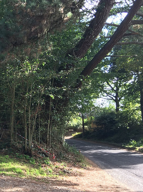 Landmark Pines LPL.jpg