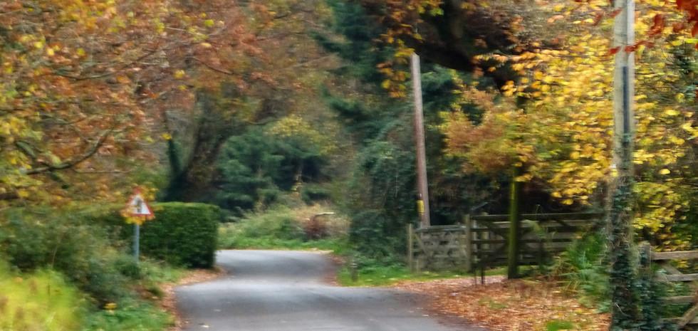 Autumn on Ridgeway Lane