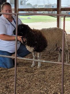Sheep 19.jpg