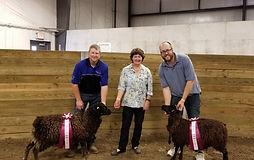 Sheep 3 Champ and Reserve_edited.jpg