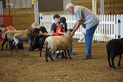 Sheep 7.png