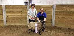 Sheep 4 Reserve ewe.jpg