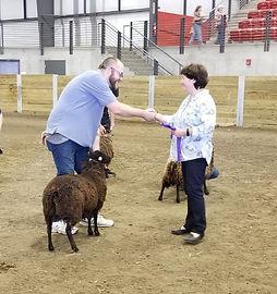 Sheep 6 Champion ewe_edited.jpg