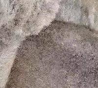The Rise-Rooing Shetland Sheep Fleece