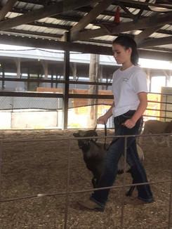 Sheep 12.jpg