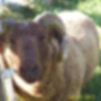 Sharie%20Ecker_edited.jpg
