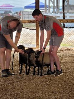 Sheep 20.jpg