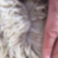 Ramsay Breeder Page Left.jpg