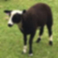 Breeders Directory Scharlau 2_edited.jpg