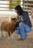 2019 MSSBA Sheep 12.jpg