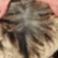 Breeder Directory Powers 2.jpg