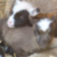 Breeder Directory Powers 3_edited.jpg