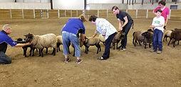 Sheep 7 Dam and lamb.jpg