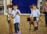 2019 MSSBA Sheep 3.jpg