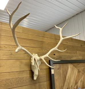 STH Elk (regular)