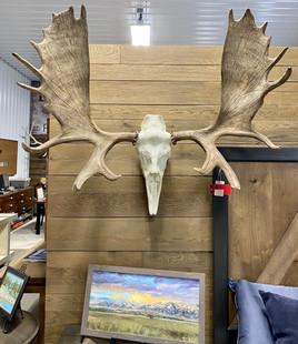STH Moose (large)