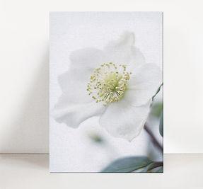WHITE FLOWER no.1.jpg