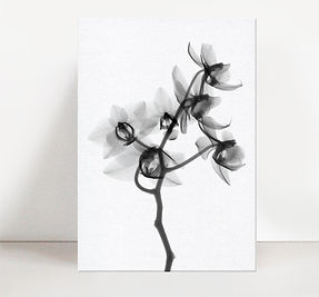 KWIATY BLACK AND WHITE.jpg
