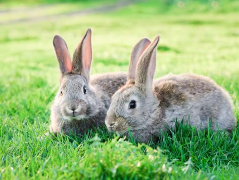 Better bunnies!