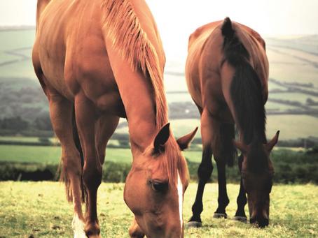 Penbode Equine Vets - Summer newsletter 2021