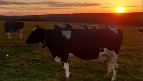 Penbode Farm Vets June 2021 Newsletter