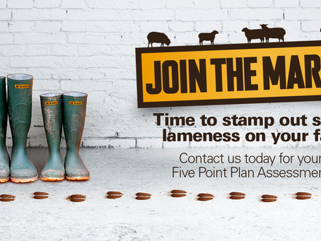 Join the march ... against sheep lameness