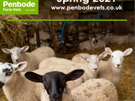 Penbode Farm Vets - Spring Sheep Newsletter