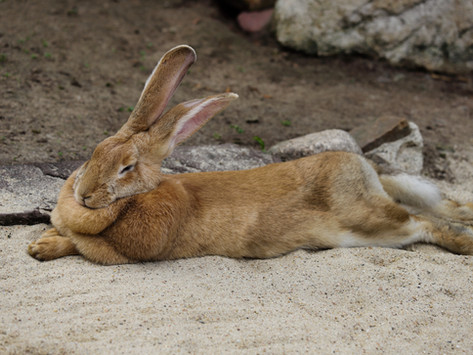 Is your rabbit MOT up to date?