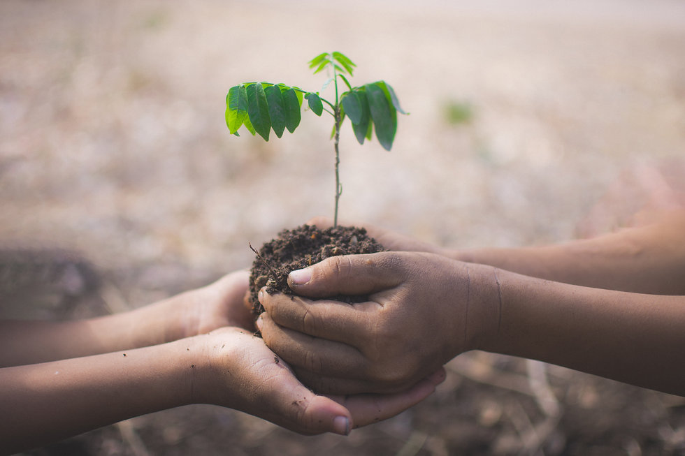 hand-of-children-holding-plant-and-soil-
