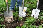 gardening-331986.jpg