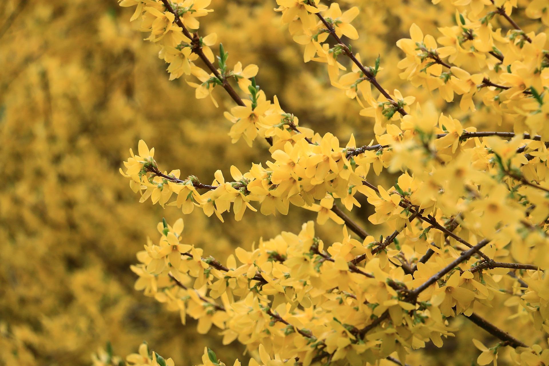 yellow-760746_1920