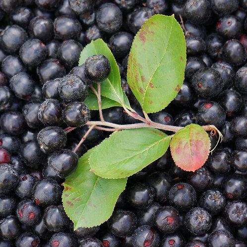 Арония черноплодная (Aronia melanocarpa)