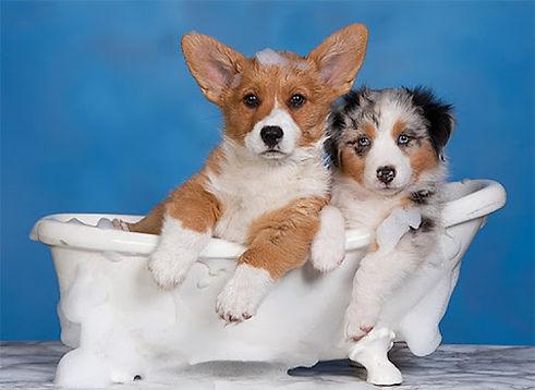 dogbathimage 2.jpg