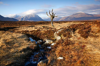 the-solitary-tree-at-rannoch-moor__large